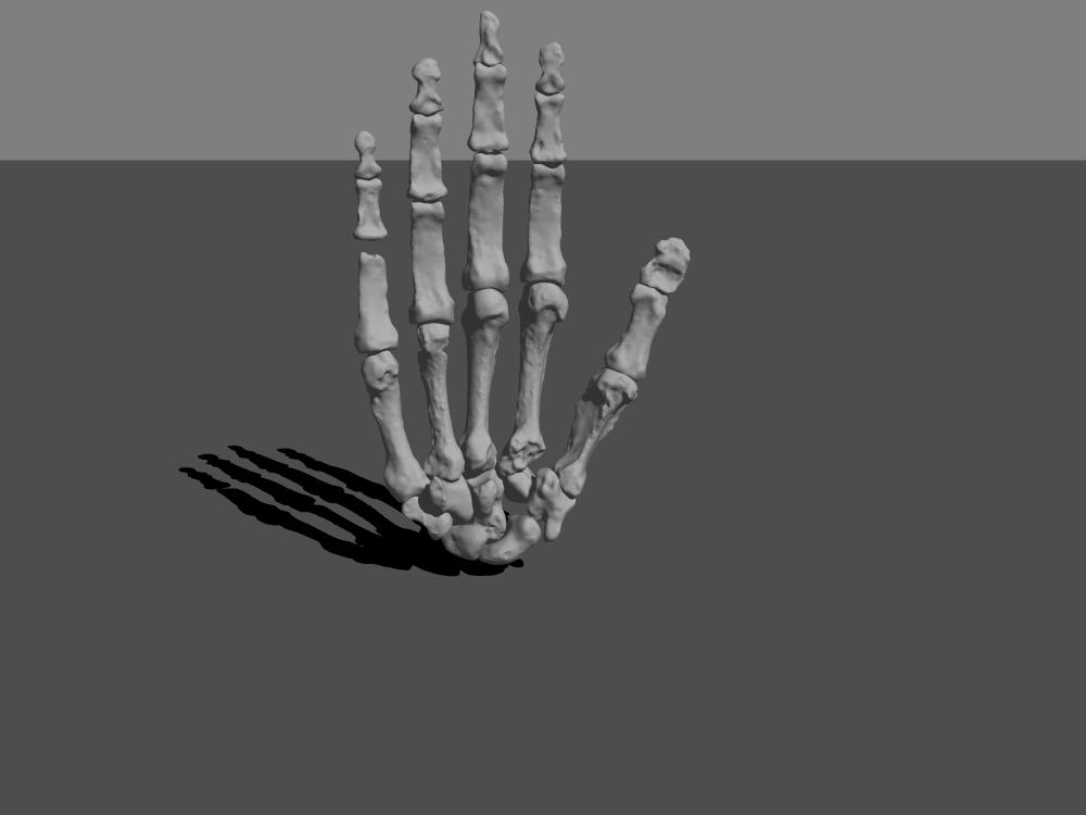Homo naledi hand image